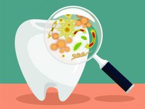 Toot- Bacteria